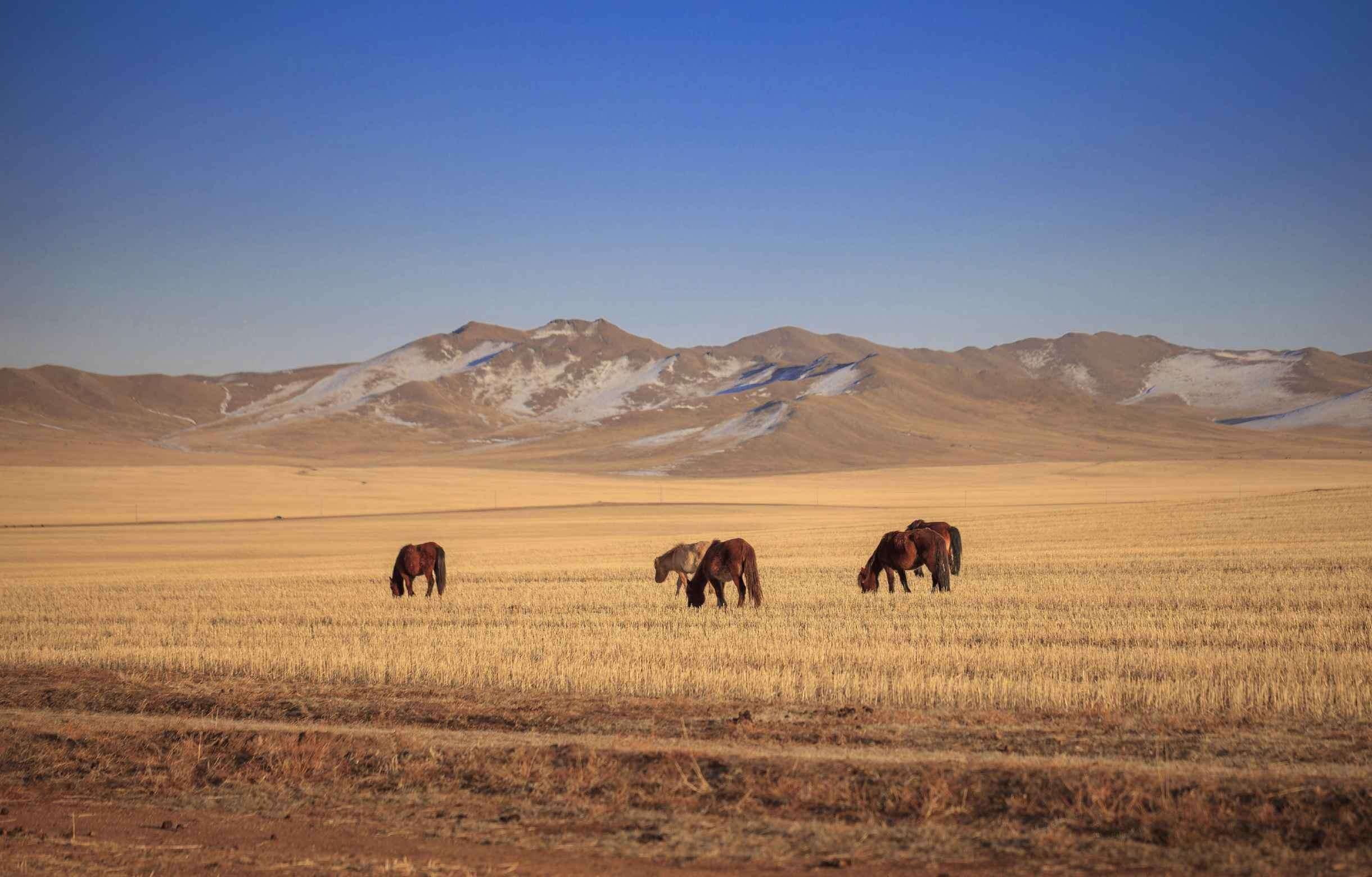 Northeast Asia - Mongolia and China Landscape
